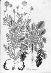 Botánica húngara